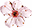 cherry-blossom-transparent-favicon