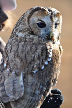 owl-resized