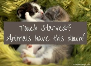"Cuddling Kittens with words ""Animals have it Down"""