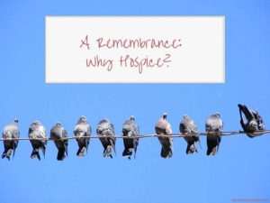"Pigeons on a Wire with the words ""A Remembrance: Why Hospice?"